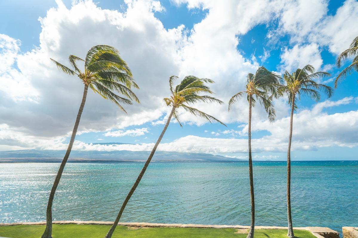 Lauloa condo # 110, Wailuku, Hawaii - photo 25 of 29