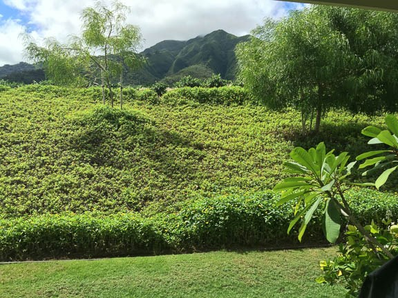 Hoolea Terrace at Kehalani condo # 2503, Wailuku, Hawaii - photo 25 of 29