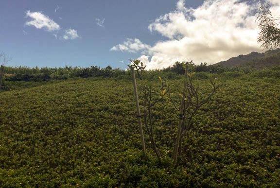 Hoolea Terrace at Kehalani condo # 2503, Wailuku, Hawaii - photo 26 of 29