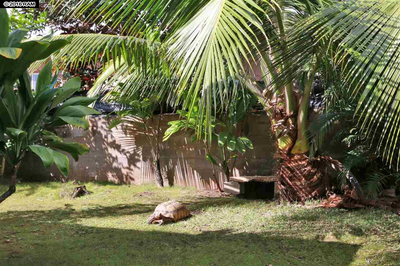2113  Ihumai Pl , Wailuku home - photo 25 of 29