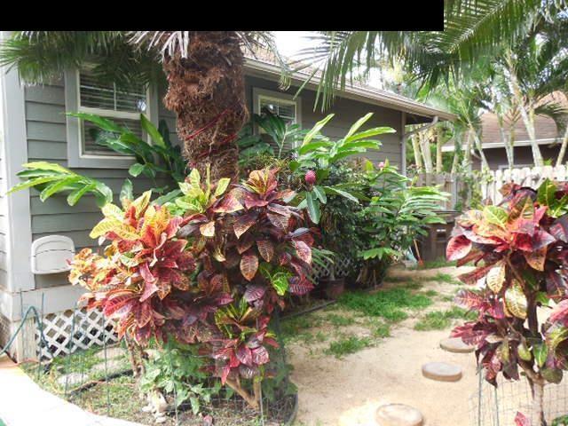 24  Hoaka Pl Kahana, Napili/Kahana/Honokowai home - photo 18 of 20