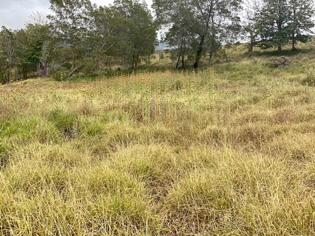 2533 Lower Kula Rd 1 Kula, Hi 96790 vacant land - photo 6 of 8
