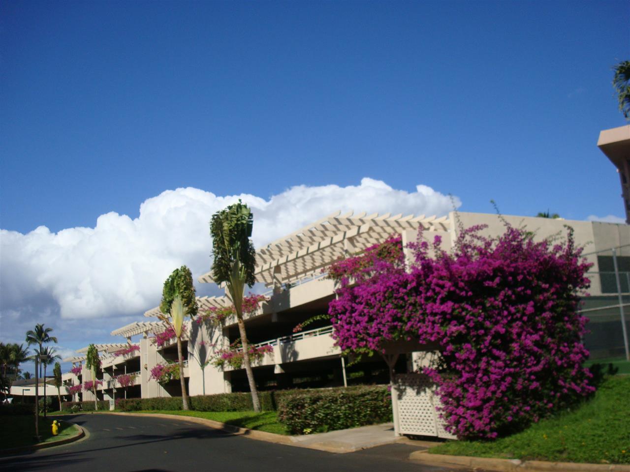 Maui Banyan condo # H511, Kihei, Hawaii - photo 15 of 17
