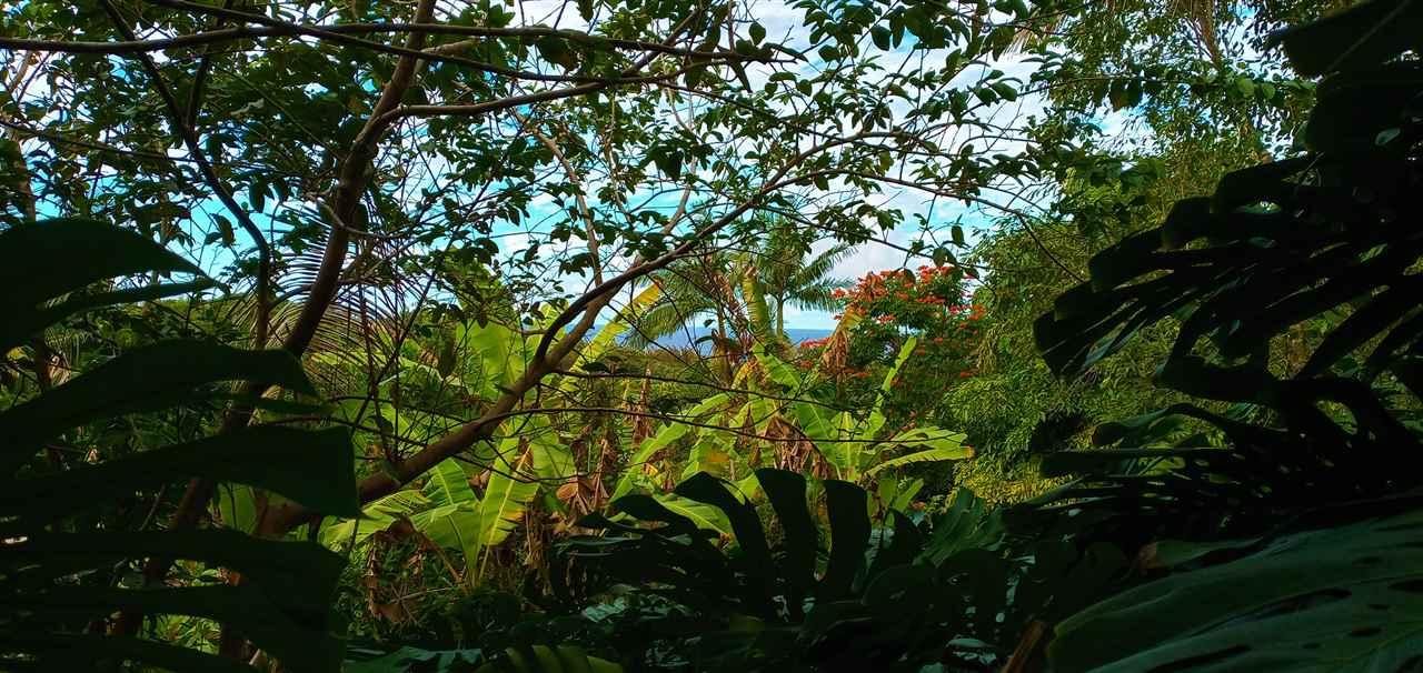 400  Honokala Stream Rd , Haiku home - photo 11 of 29