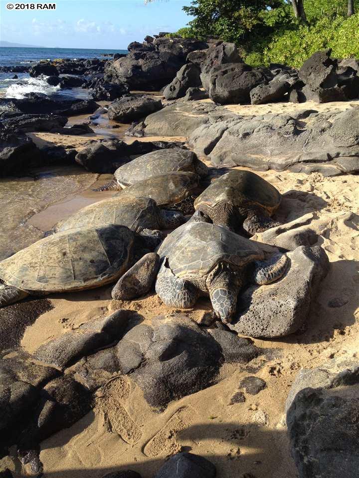 Mahinahina Beach condo # 211, Lahaina, Hawaii - photo 25 of 25