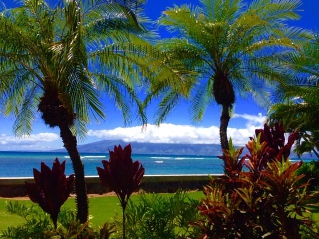 Pohailani Maui condo # 124, Lahaina, Hawaii - photo 29 of 29