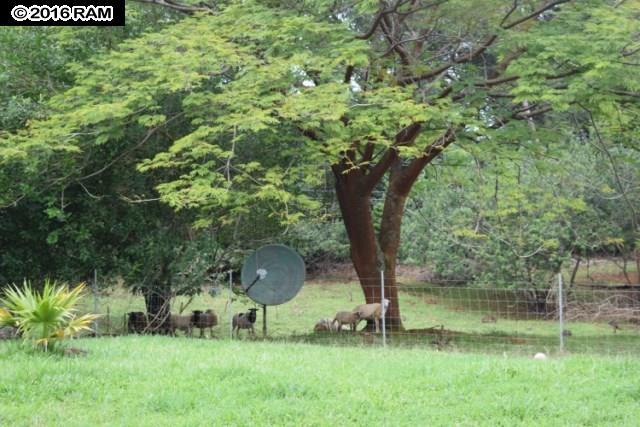 685  Upper Ulumalu Rd , Haiku home - photo 22 of 30
