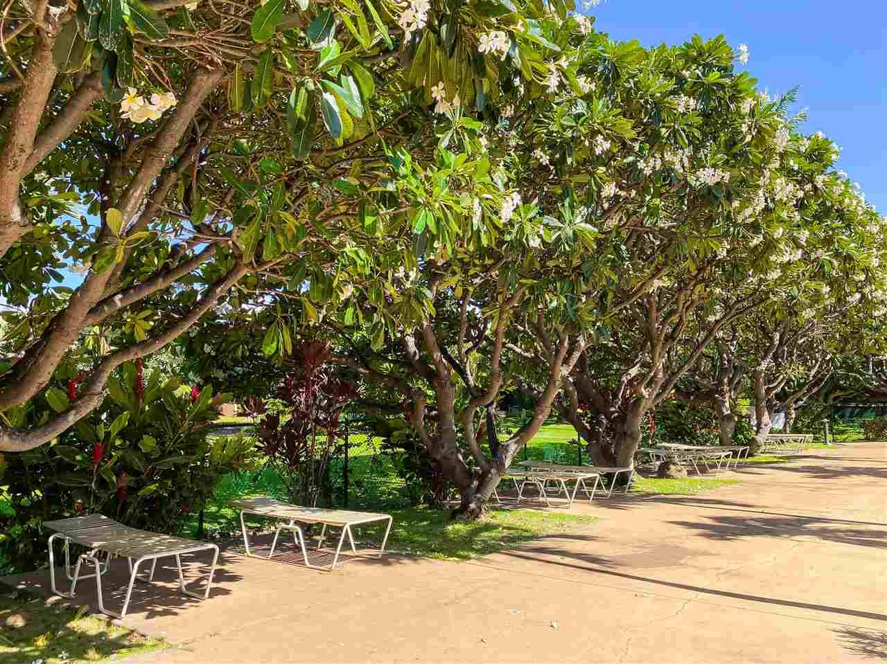 Koa Resort condo # 1B, Kihei, Hawaii - photo 25 of 30