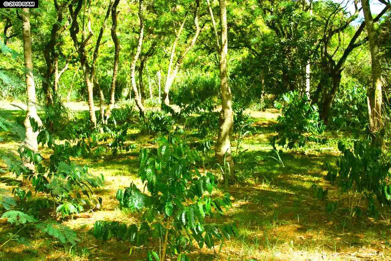 0 Hana Hwy  Haiku-Pauwela, Hi 96708 vacant land - photo 26 of 30