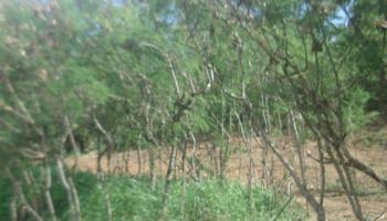 1063 Lower Main St 416 Wailuku, Hi 96793 vacant land - photo 1 of 8