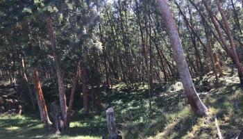 1511 Polipoli Rd B Kula, Hi  vacant land - photo 1 of 1