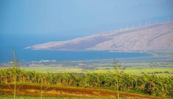 154 Hoomaikai Pl Lot 4 Kula, Hi 96790 vacant land - photo 1 of 10