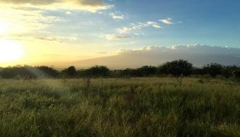 154 Hoomaikai Pl Lot 4 Kula, Hi 96790 vacant land - photo 4 of 10