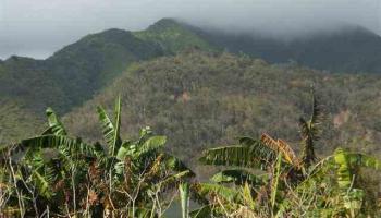 2011 Puuohala Rd 52 Wailuku, Hi 96793 vacant land - photo 3 of 6