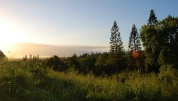 2301 Kamaile St PO Box Wailuku, Hi 96793 vacant land - photo 4 of 28