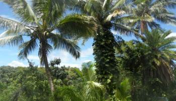 475 B  Kulike Rd Peahi, Haiku home - photo 3 of 17
