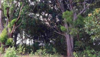 0 Kauhikoa Road  , Hi 96708 vacant land - photo 5 of 6