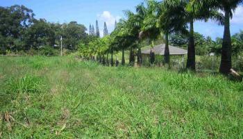 Kaupakalua Rd , Hi 96708 vacant land - photo 2 of 9