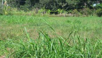 Kaupakalua Rd , Hi 96708 vacant land - photo 3 of 9