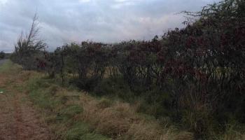 0 Pa Loa Loop  Maunaloa, Hi  vacant land - photo 1 of 2